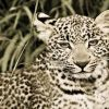 June 2012 News - Mara Plains Camp, Kenya