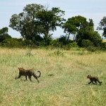 Leopardess&cub_June12-2